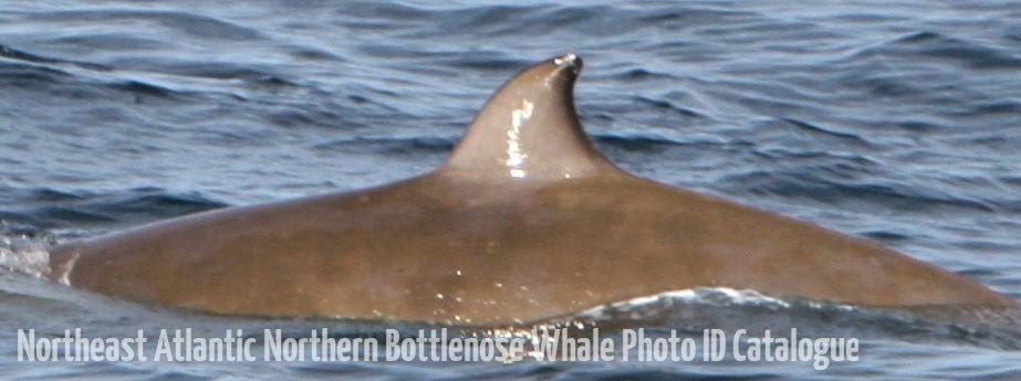 Whale ID: 0217,  Date: 22-06-2016,  Photographer: Natassia Eugénie
